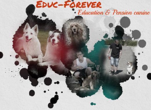 Développement d'une pension canine et éducation canine: Educ Forever