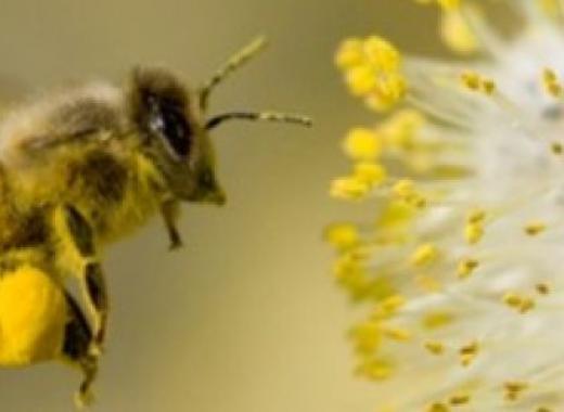 Les abeilles de Perreguines !