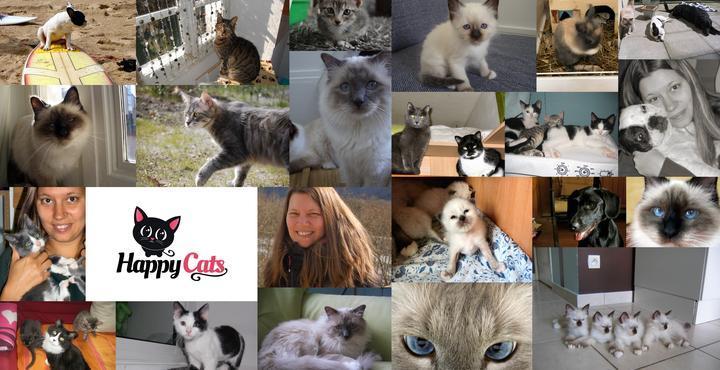 Happy-cats.fr, garde de chats à domicile