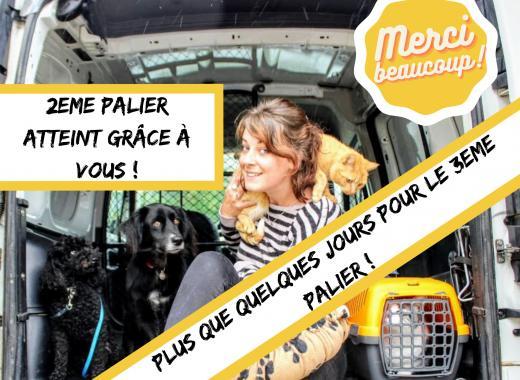 Taxi animalier - Pays de Lorient