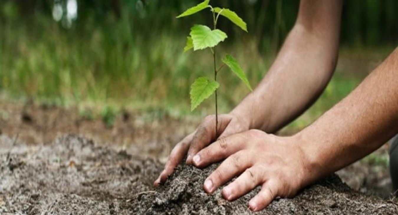 Fonds Forestier en Limousin