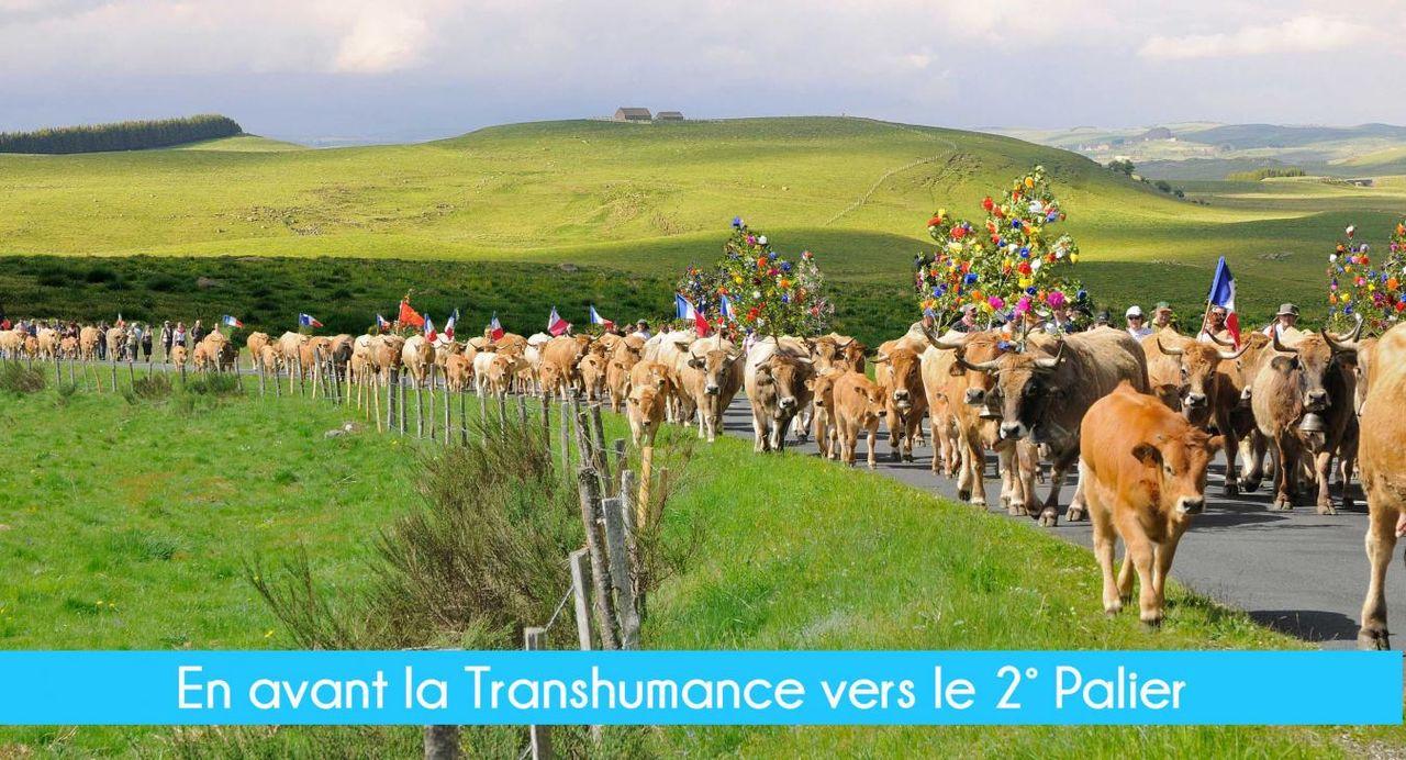 La vache Aubrac en Transhumance