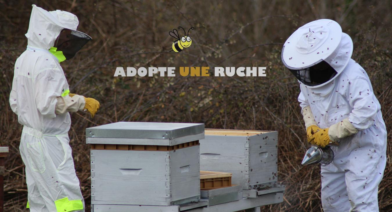 Adopte une ruche 40