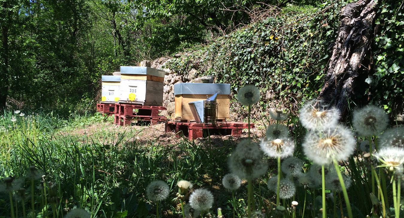 Parrainez des abeilles et dégustez votre miel !