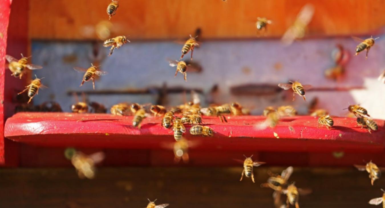 Des ruches à Saint-André de Cubzac