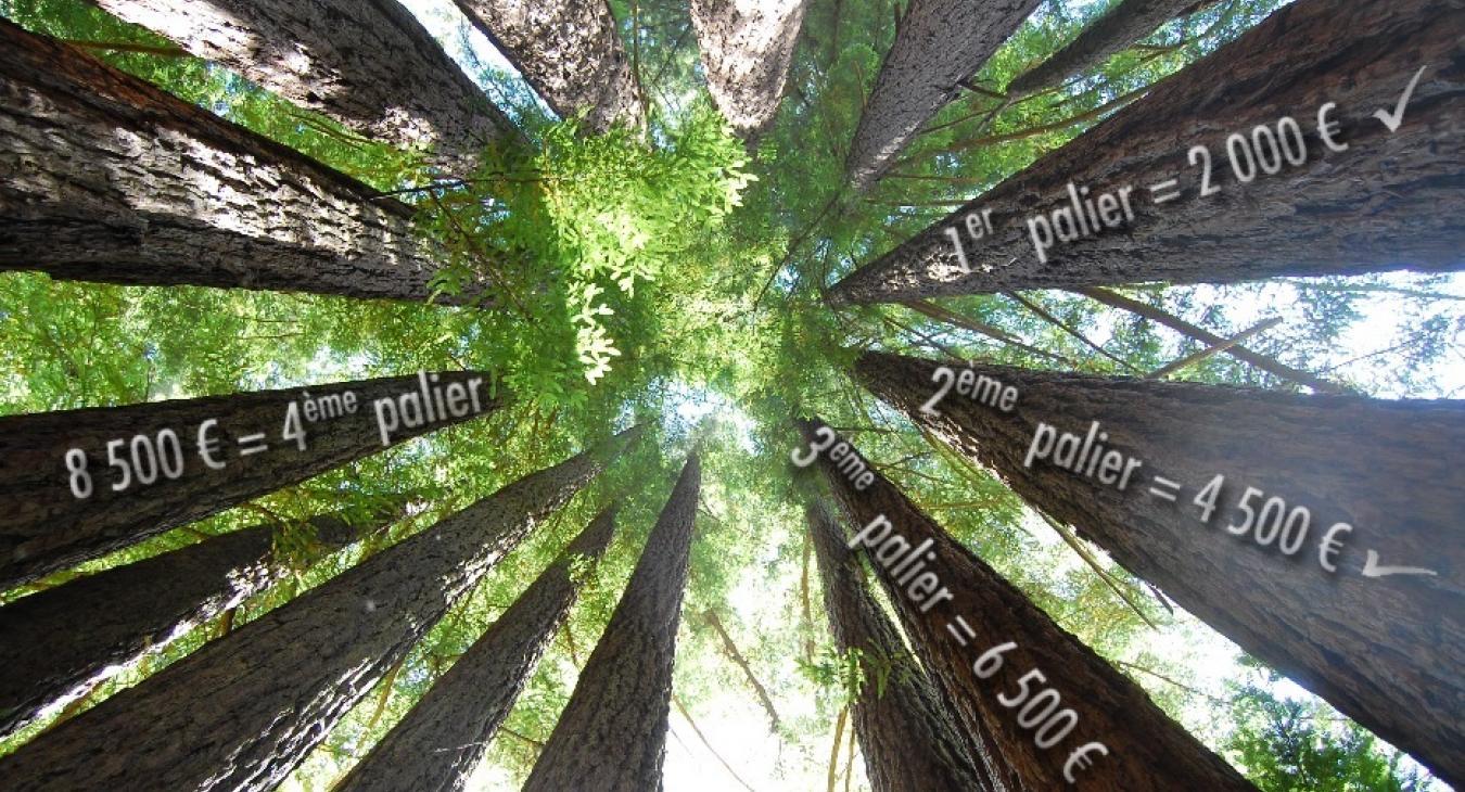 Duramen, tous concernés par l'avenir de nos forêts !