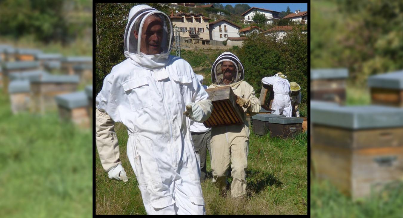Parrainez des abeilles en Centre-Bretagne!
