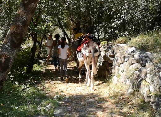 Comédi'Ânes : Les Balad'ânes Contées