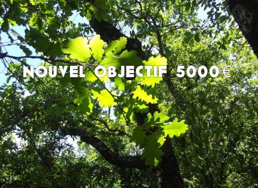La Forêt d'Émile Zarbre