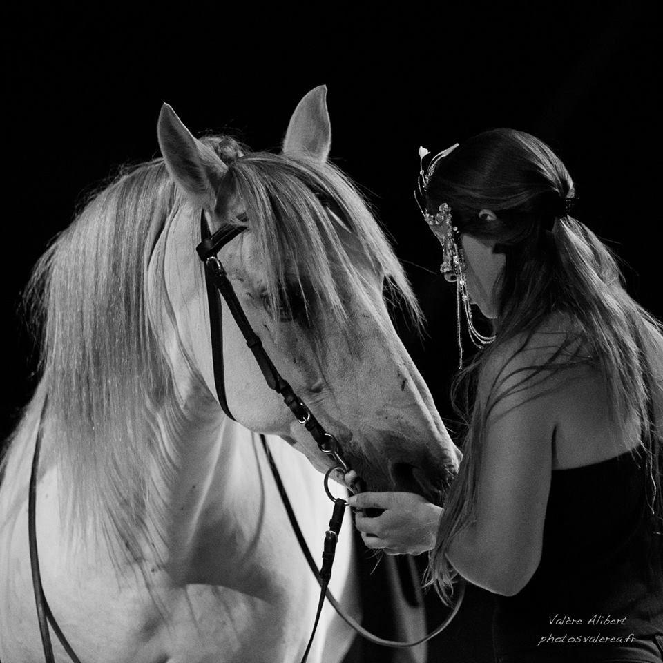 Carmen Opera Equestre Un Crowdfunding Culture Sur Bulb In Bretagne