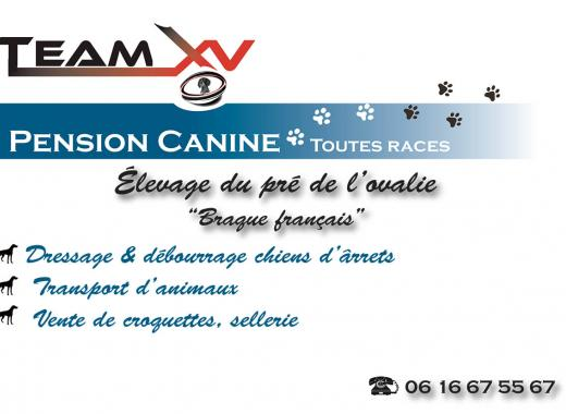 Pension, élevage, dressage canin: TEAM XV