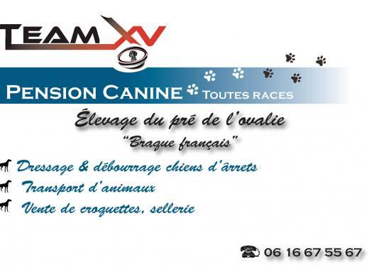Pension, élevage, dressage canin: TEAM XV